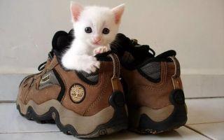 Кот пометил ботинки? Советы как вывести запах кошачьей мочи из обуви