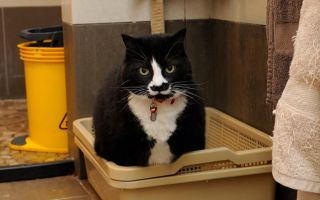 Как пользоваться кошачьим лотком с сеткой — рекомендации по уходу