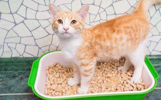 Как избавиться от запаха кошачьего туалета — лучшие ликвидаторы запахов