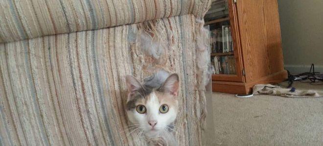 Как отучить кота драть диван – возможные средства и способы