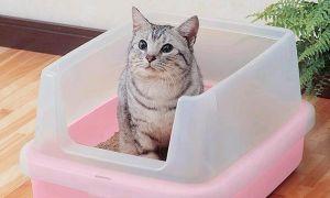 Чем отмыть пластмассовый кошачий лоток — советы по уходу