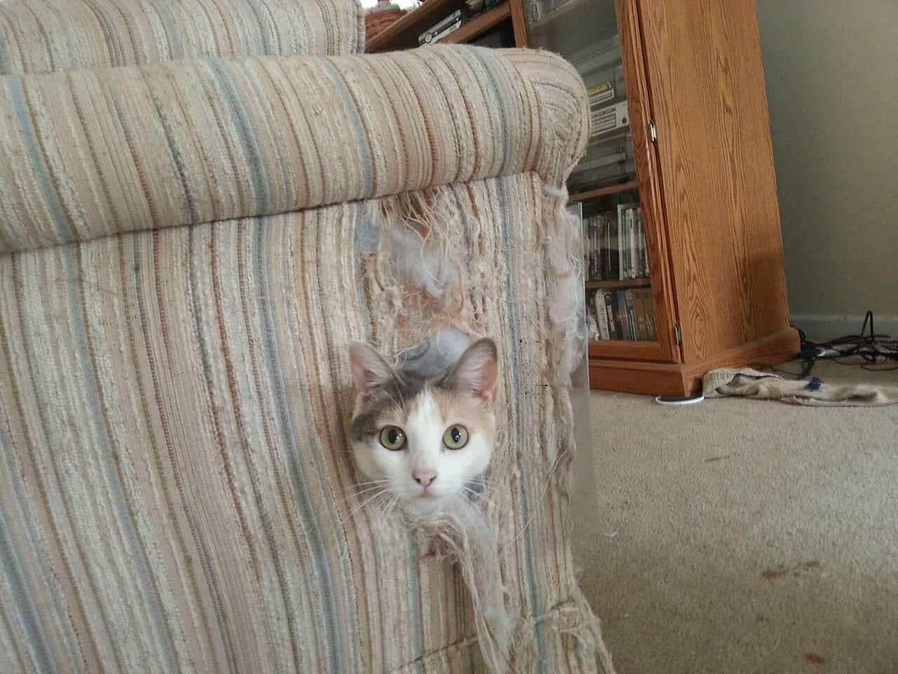 Кот дерет мебель