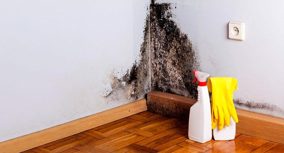 Плесень в доме - вред и влияние на здоровье человека